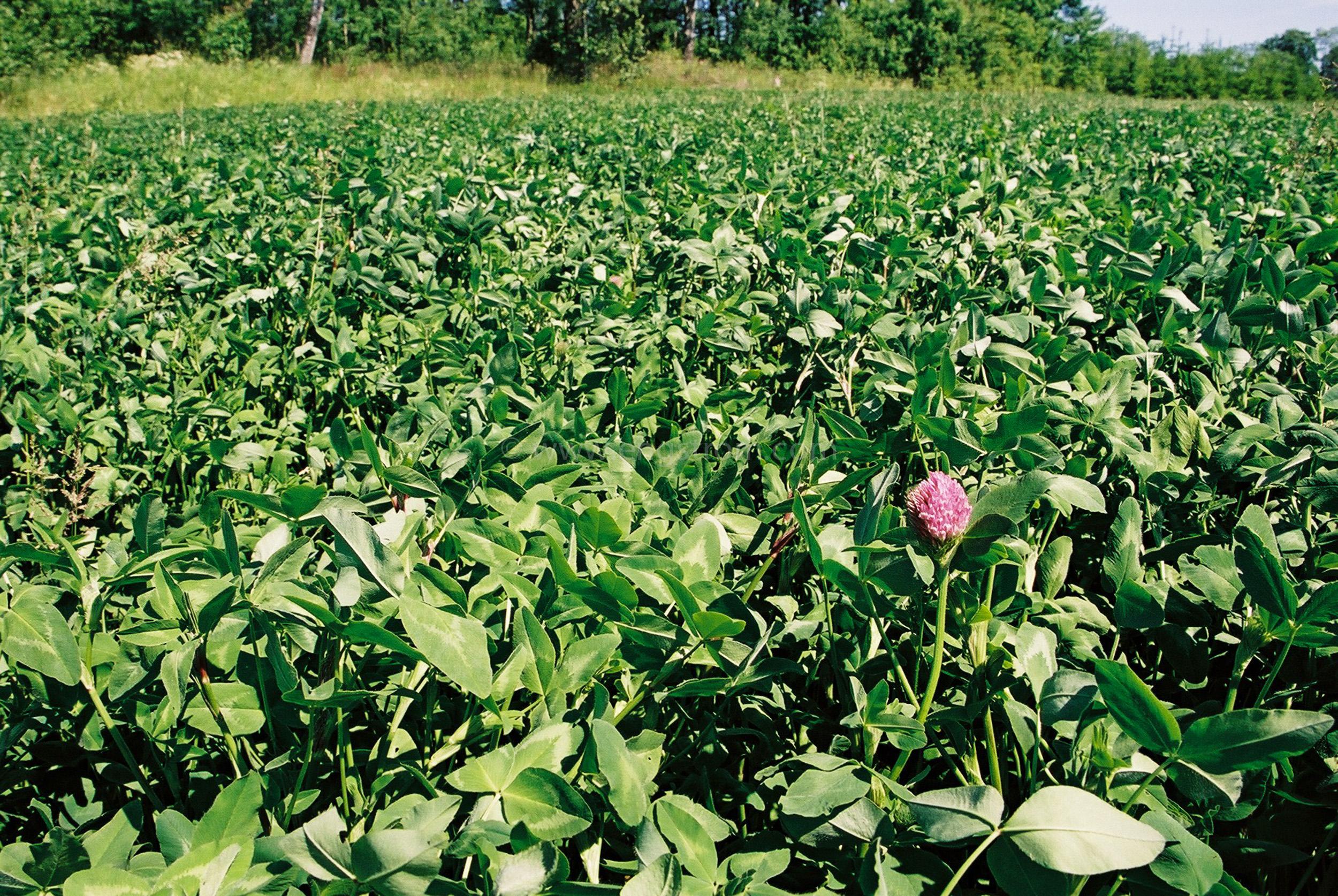 JE0104_03, Åker med rödklöver sommaren 2001, Jonas Engström