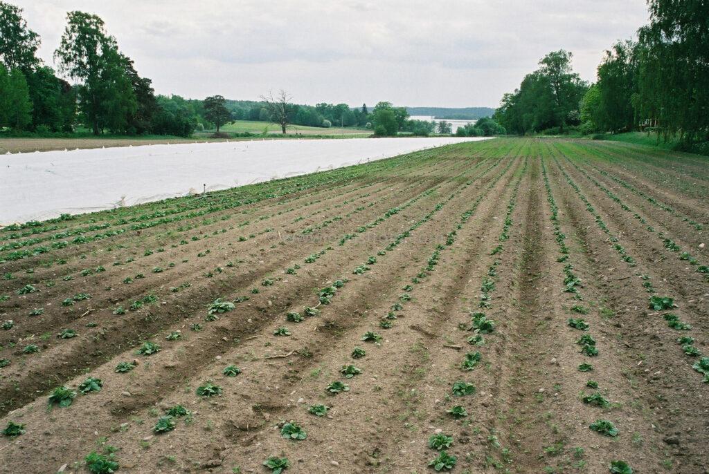 JE0205_14, Potatis våren 2002, Jonas Engström