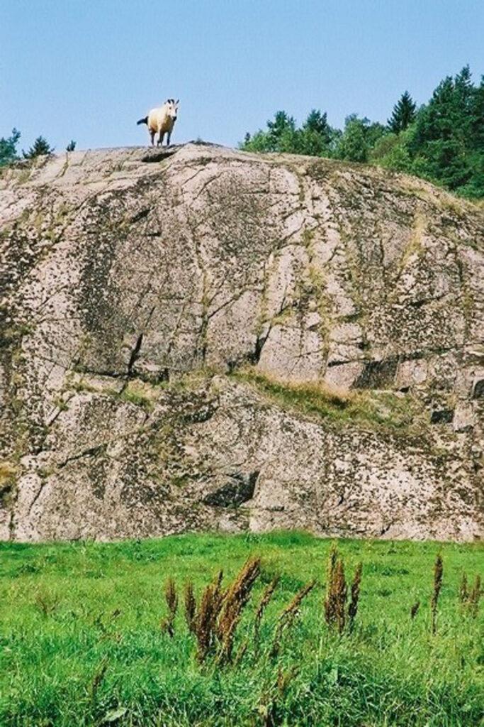 JE0206_04, Häst på klippa i Bohuslän. Sommaren 2002, Jonas Engström