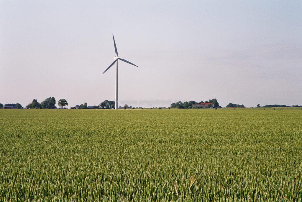JE0311_14, Vindkraftverk bakom veteåker. Falsterbo sommaren 2003, Jonas Engström