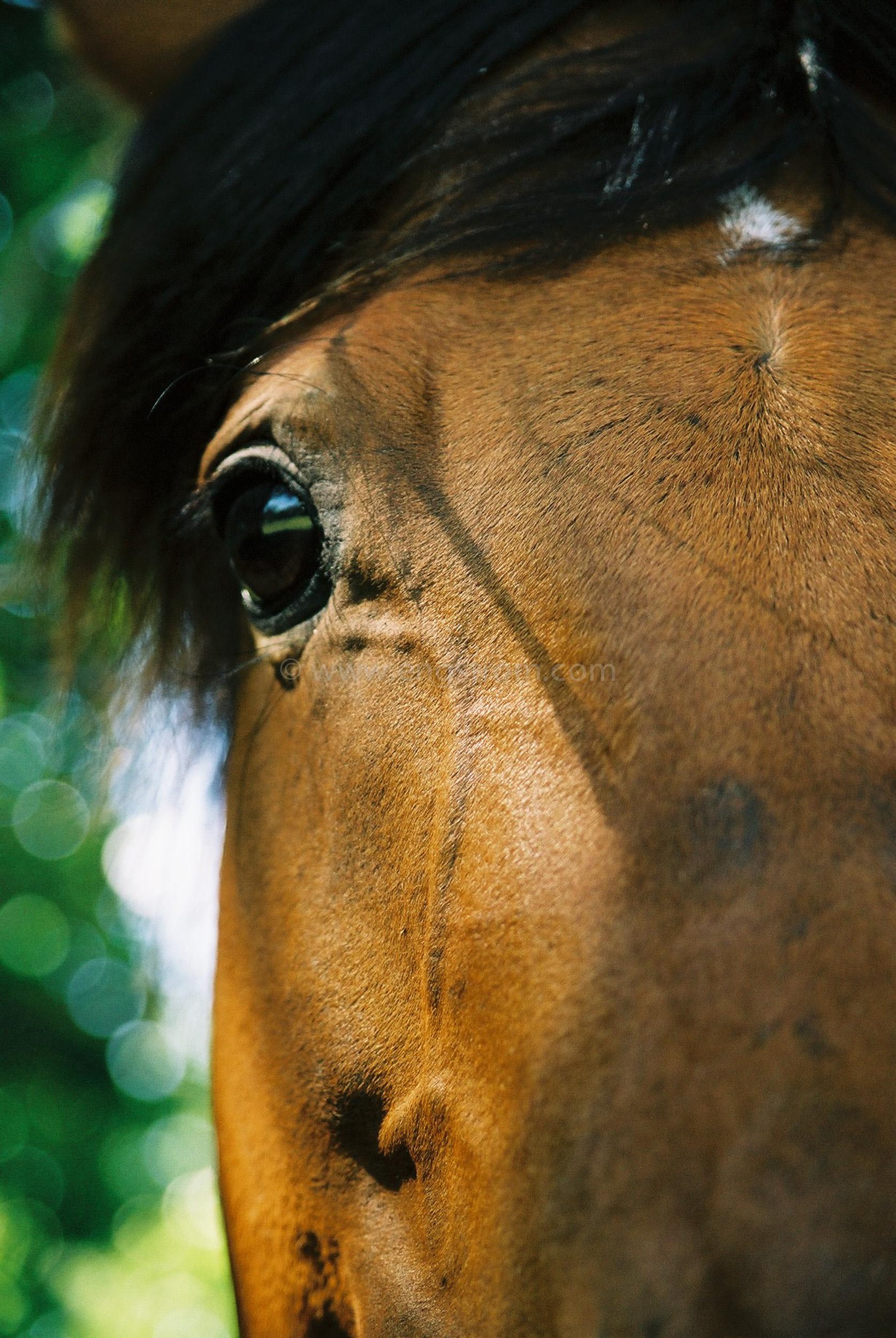 JE0315_08, Närbild på ponny / häst, Jonas Engström
