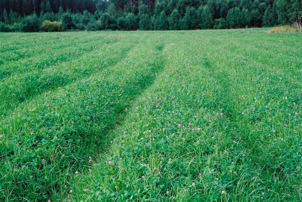 JE0321_11, Körskador i klövervall., Jonas Engström