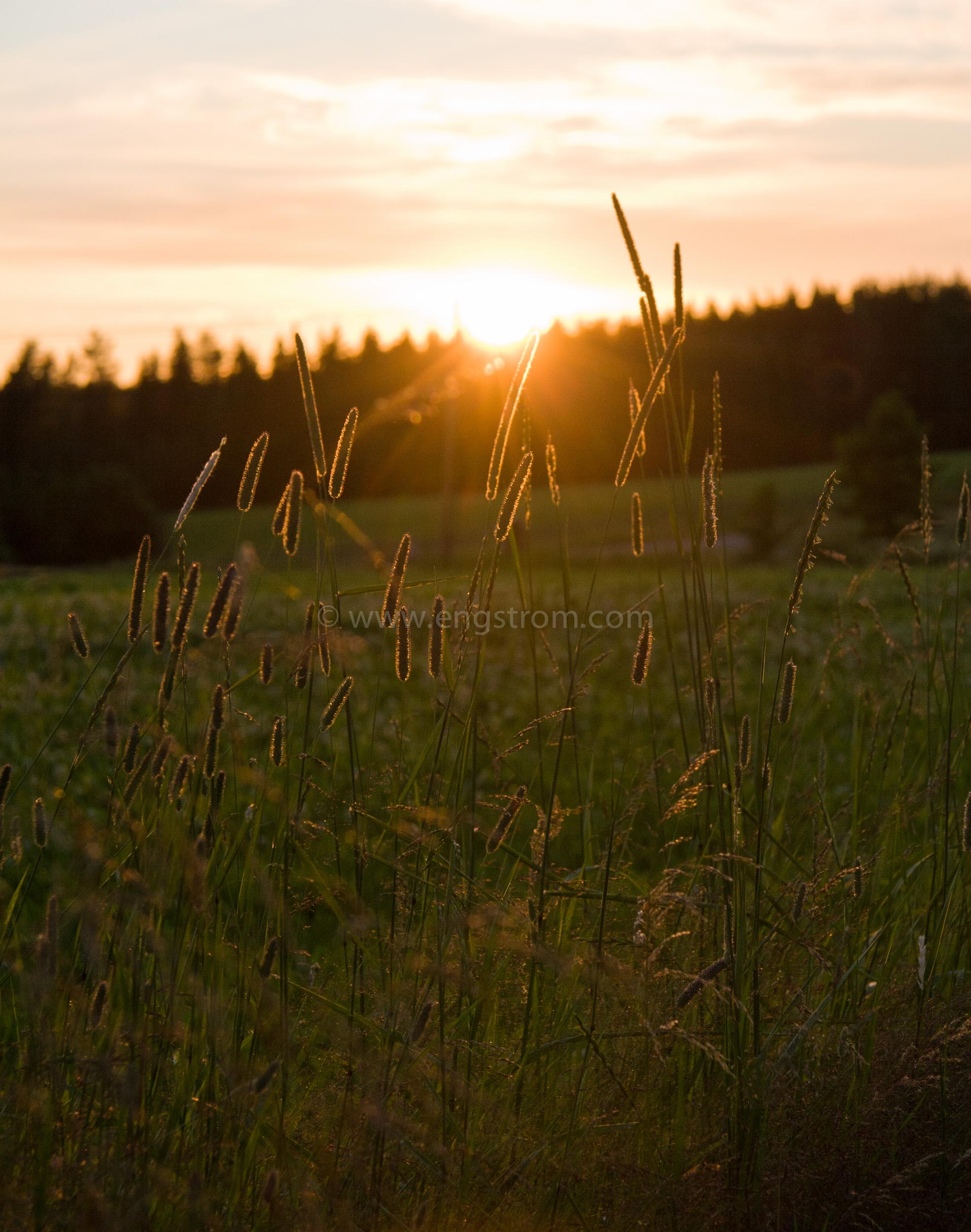 JE_11501, Solnedgång på sommaren, Jonas Engström