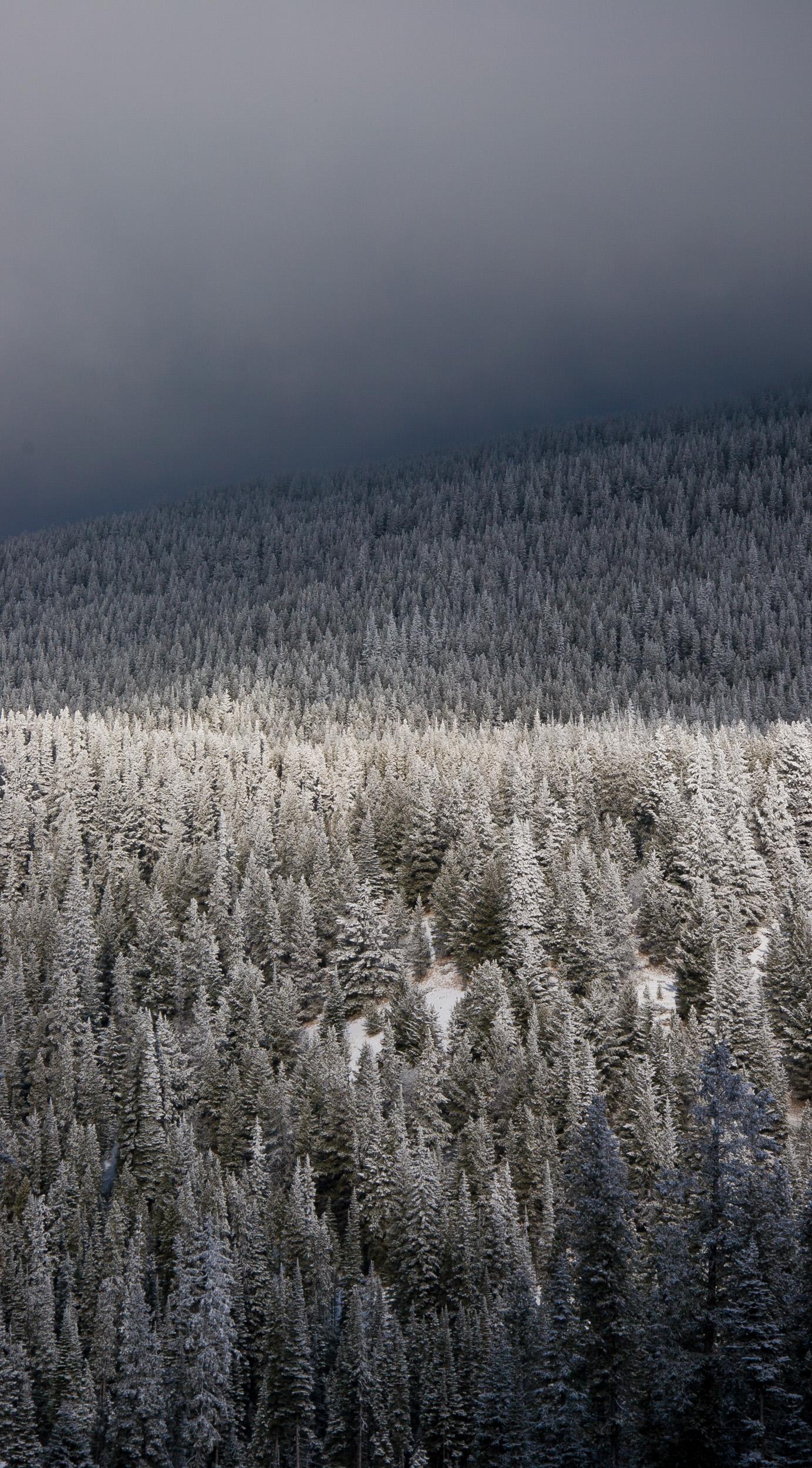 JE_1200, Solljus som silar genom molen ner på den snötyngda skogen, Jonas Engström