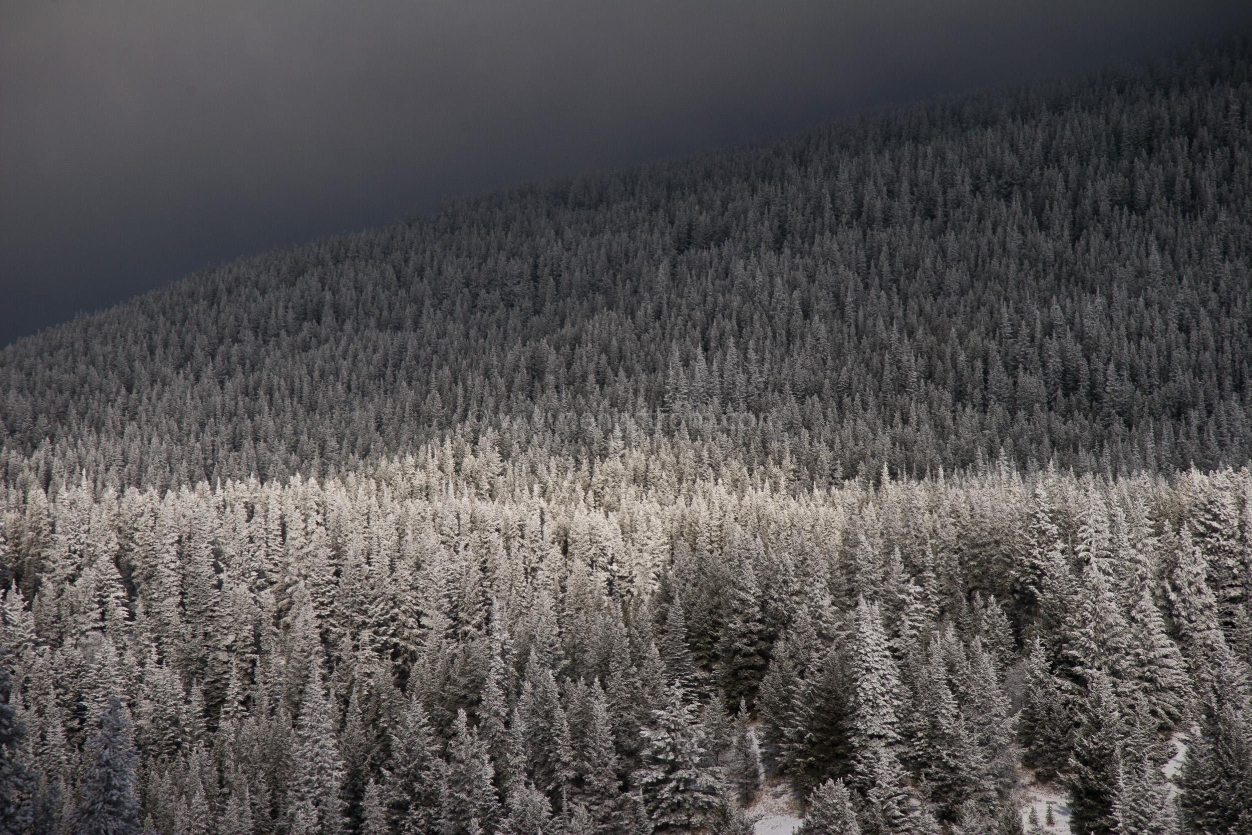 JE_1201, Solljus som silar genom molen ner på den snötyngda skogen, Jonas Engström