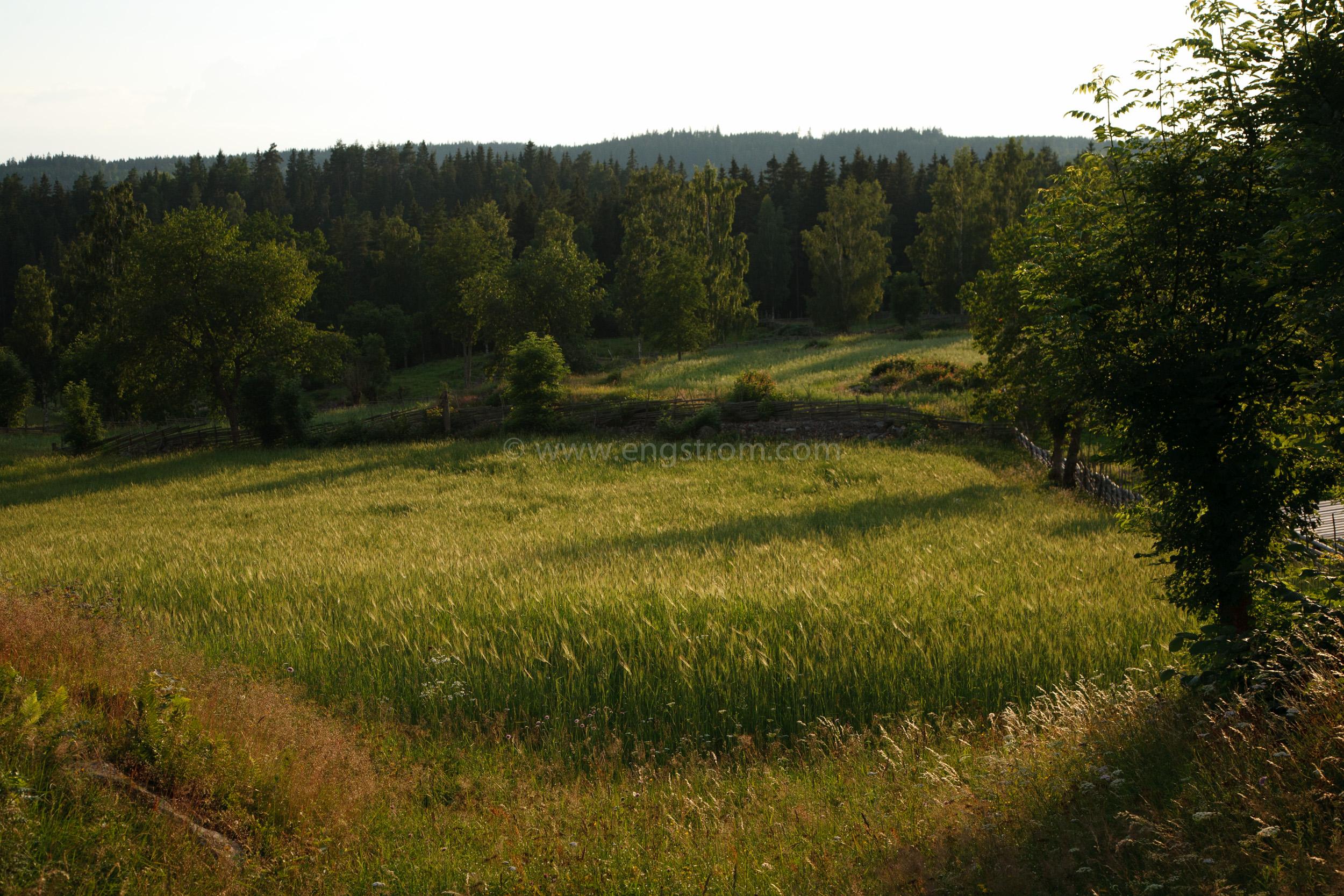 JE_20110707-193358, Solen går ner över åkrarna, Jonas Engström