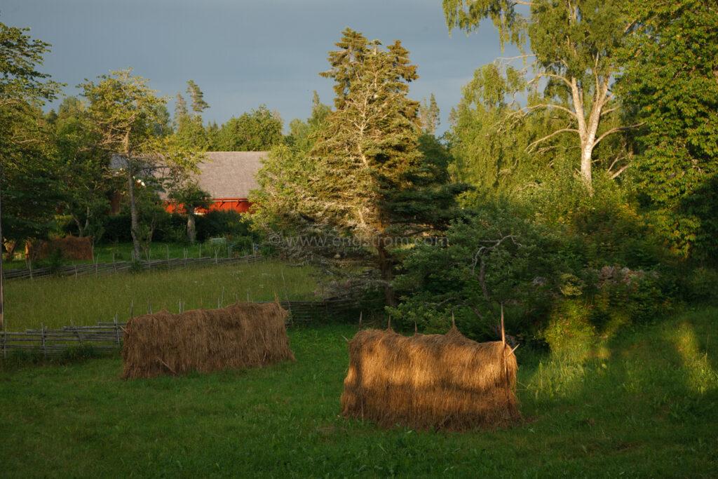 JE_20110707-193901, Solnedgången siler igenom träden på hässjan, Jonas Engström