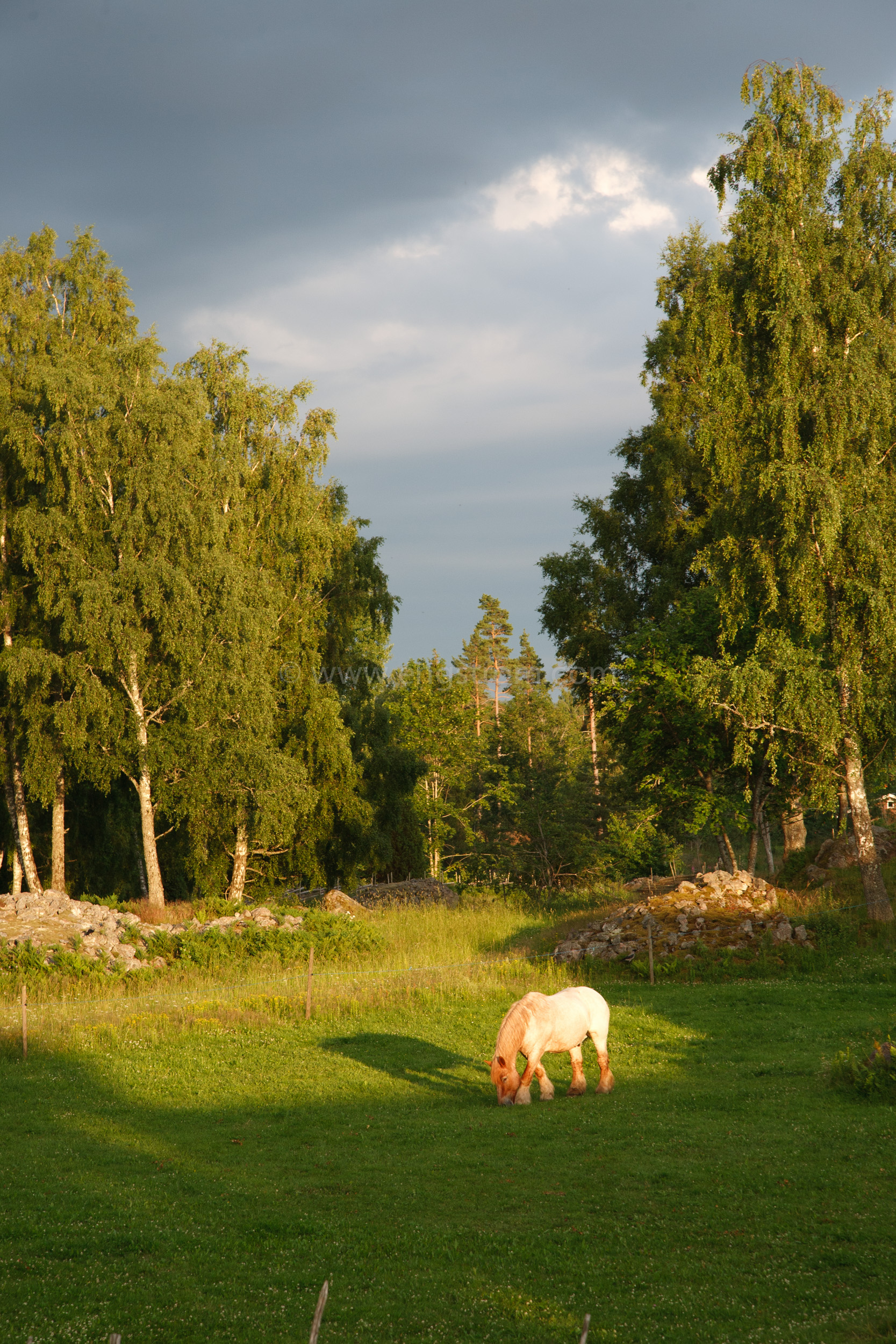 JE_20110707-195237, Arbetshäst på bete i solnedgång., Jonas Engström