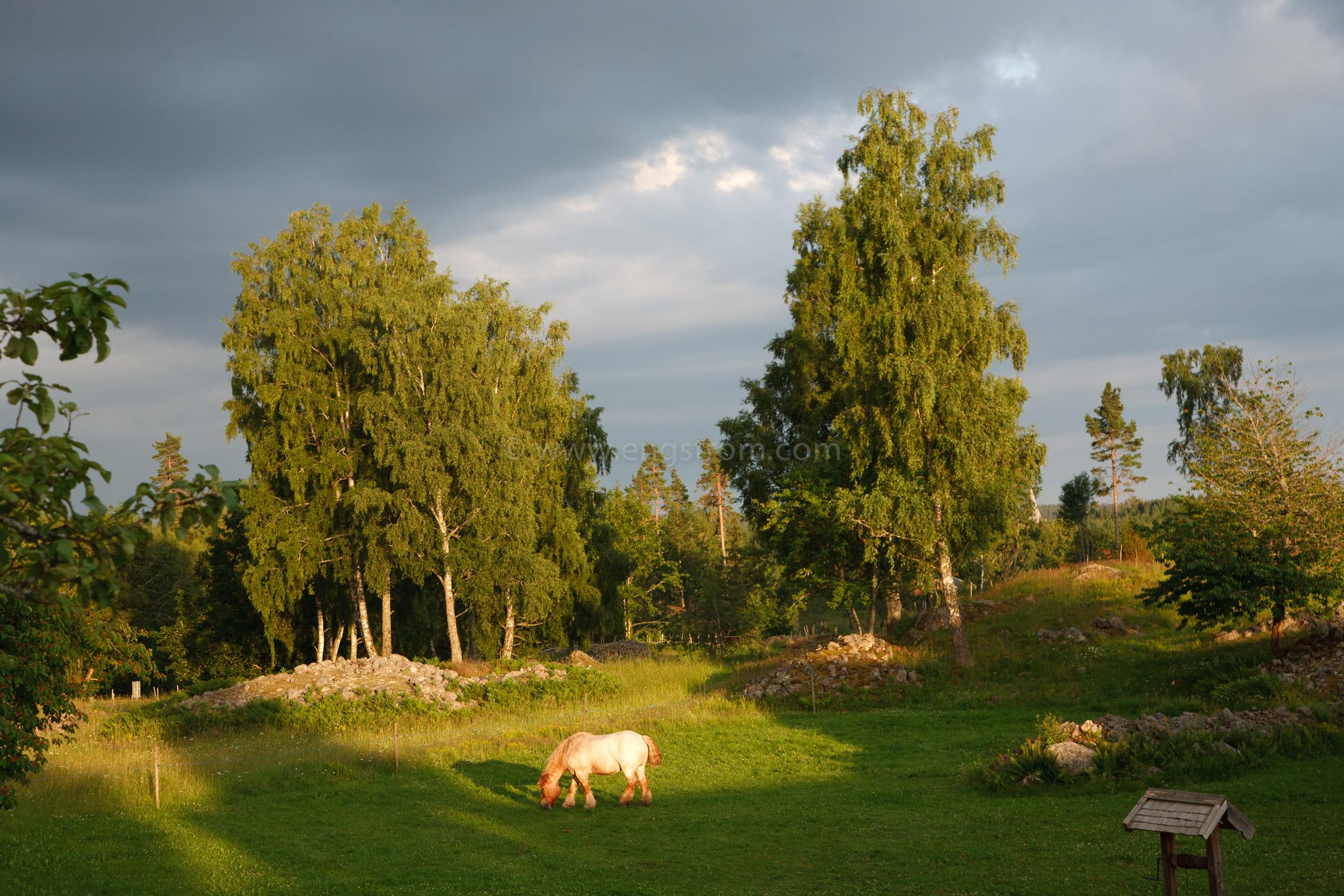 JE_20110707-195311, Arbetshäst på bete i solnedgång., Jonas Engström