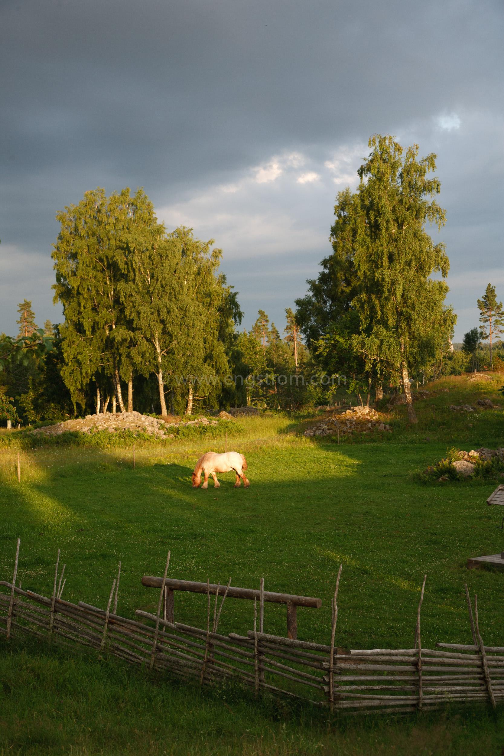 JE_20110707-195315, Arbetshäst på bete i solnedgång., Jonas Engström