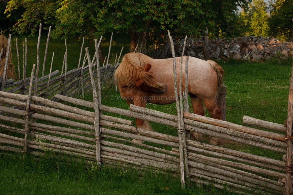 JE_20110707-200229, Arbetshäst som kliar sig, Jonas Engström