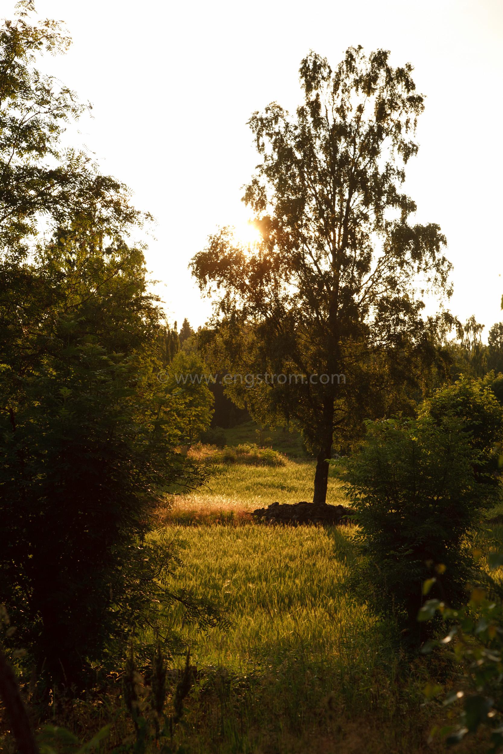 JE_20110707-200327, Solen går ner över åkrarna, Jonas Engström