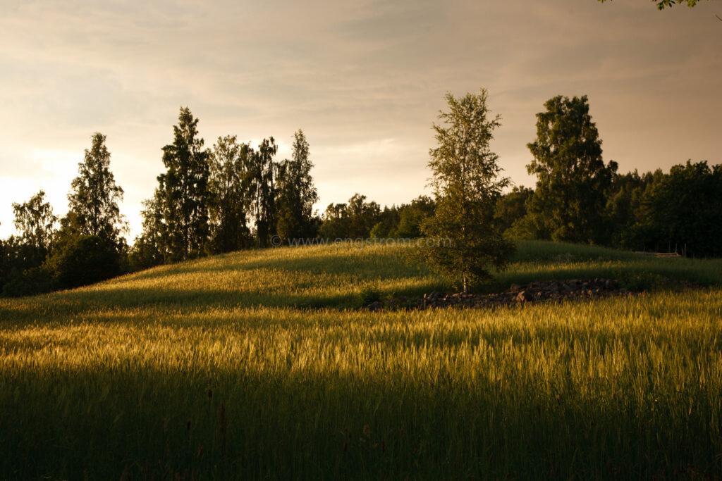JE_20110707-200601, Solen går ner över åkrarna, Jonas Engström
