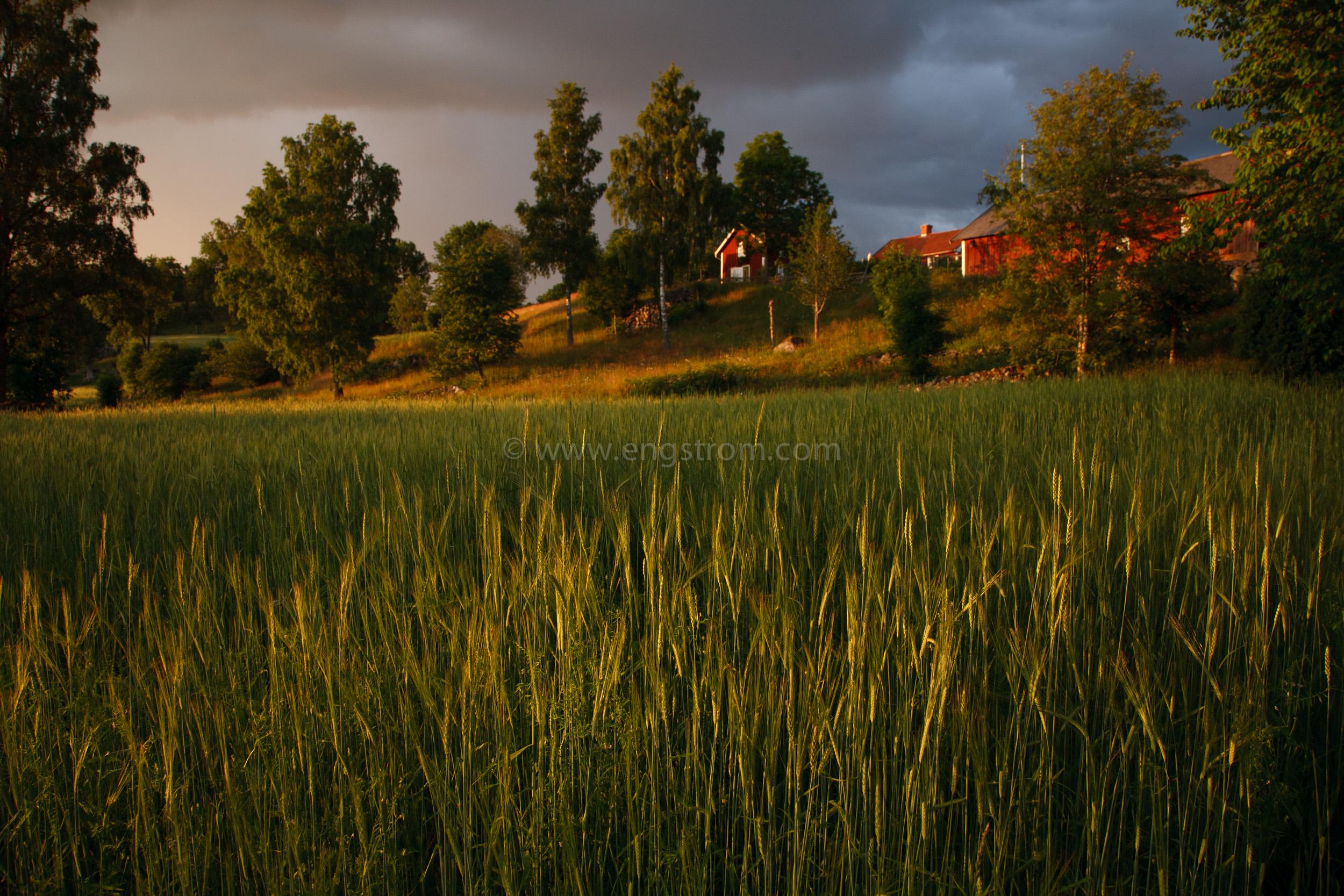 JE_20110707-201359, Korn med gård i bakgrunden, Jonas Engström