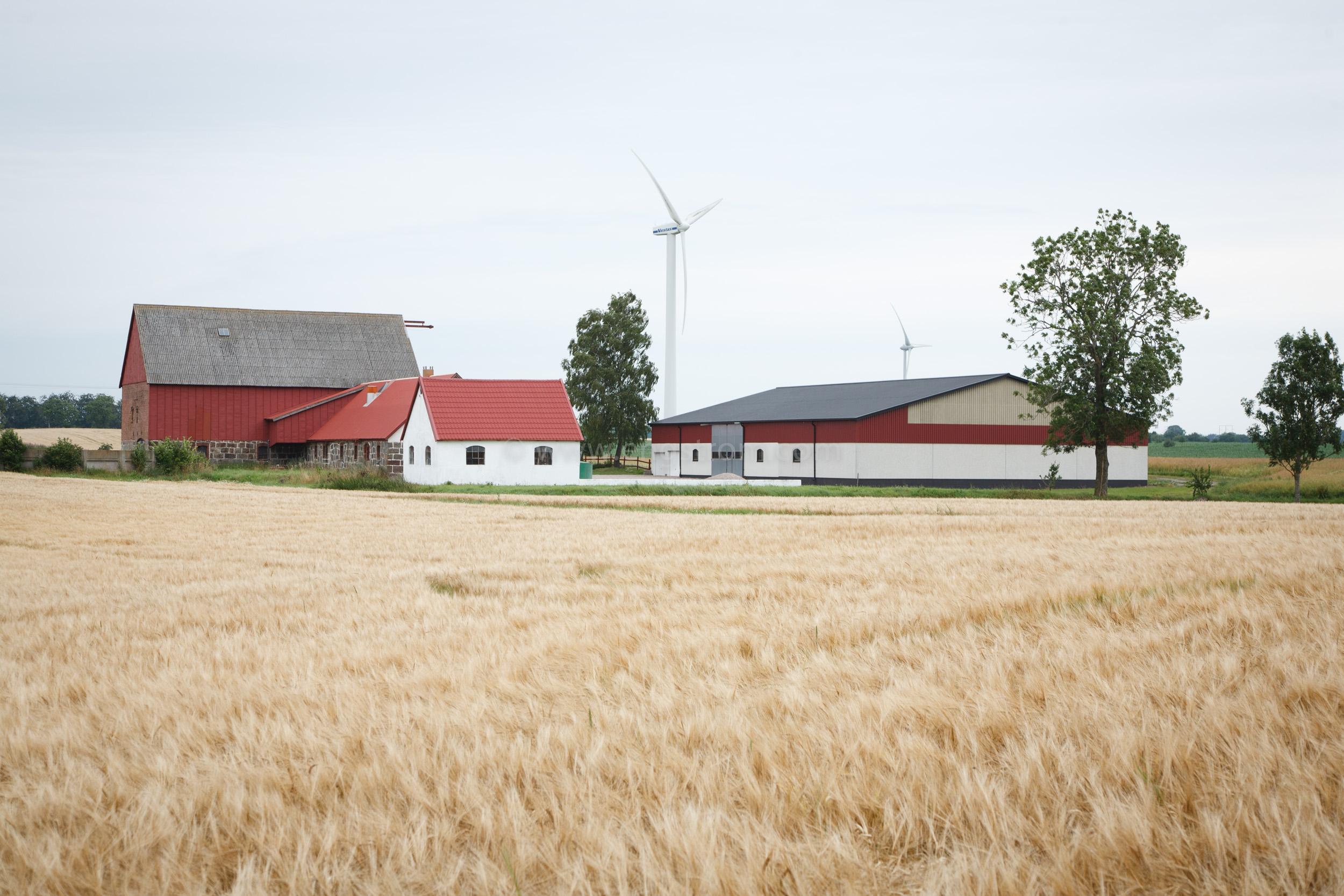 JE_20110717-095703, Korn framför gård med vindkraftverk, Jonas Engström