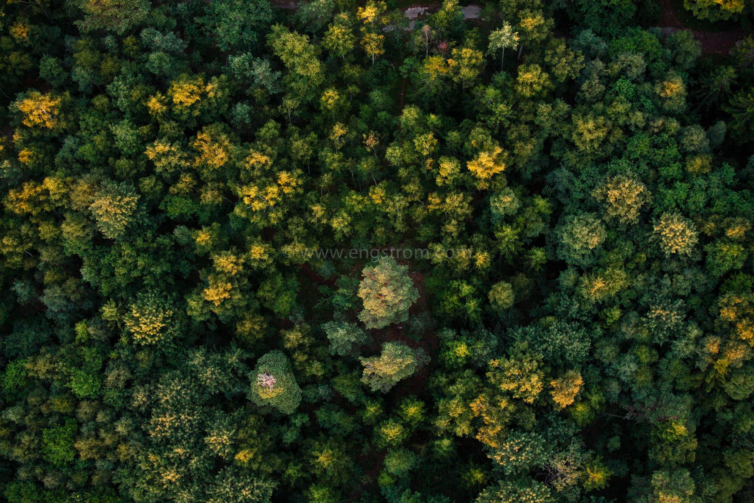 JE_20110720-211002, Skog uppifrån i skymningsljus. Flygfoto., Jonas Engström