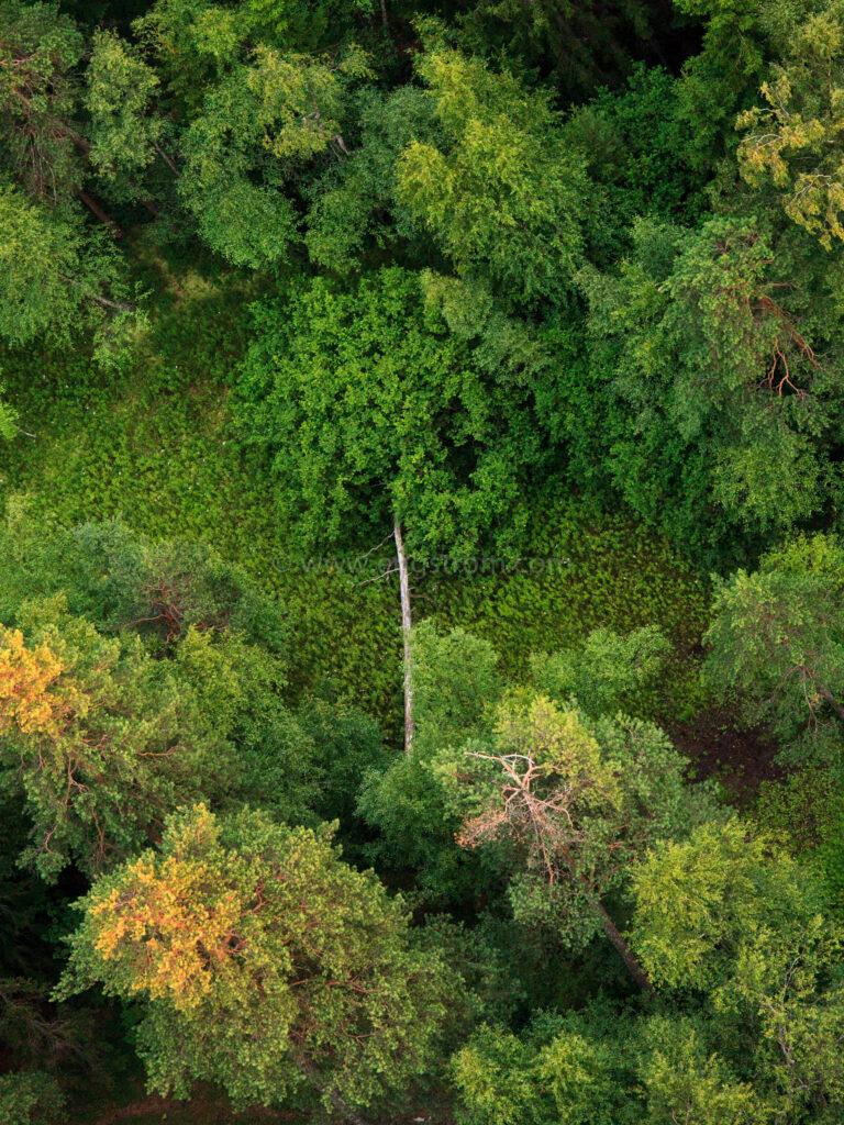 JE_20110720-211041, Liggande träd i skogsglänta. Flygfoto., Jonas Engström