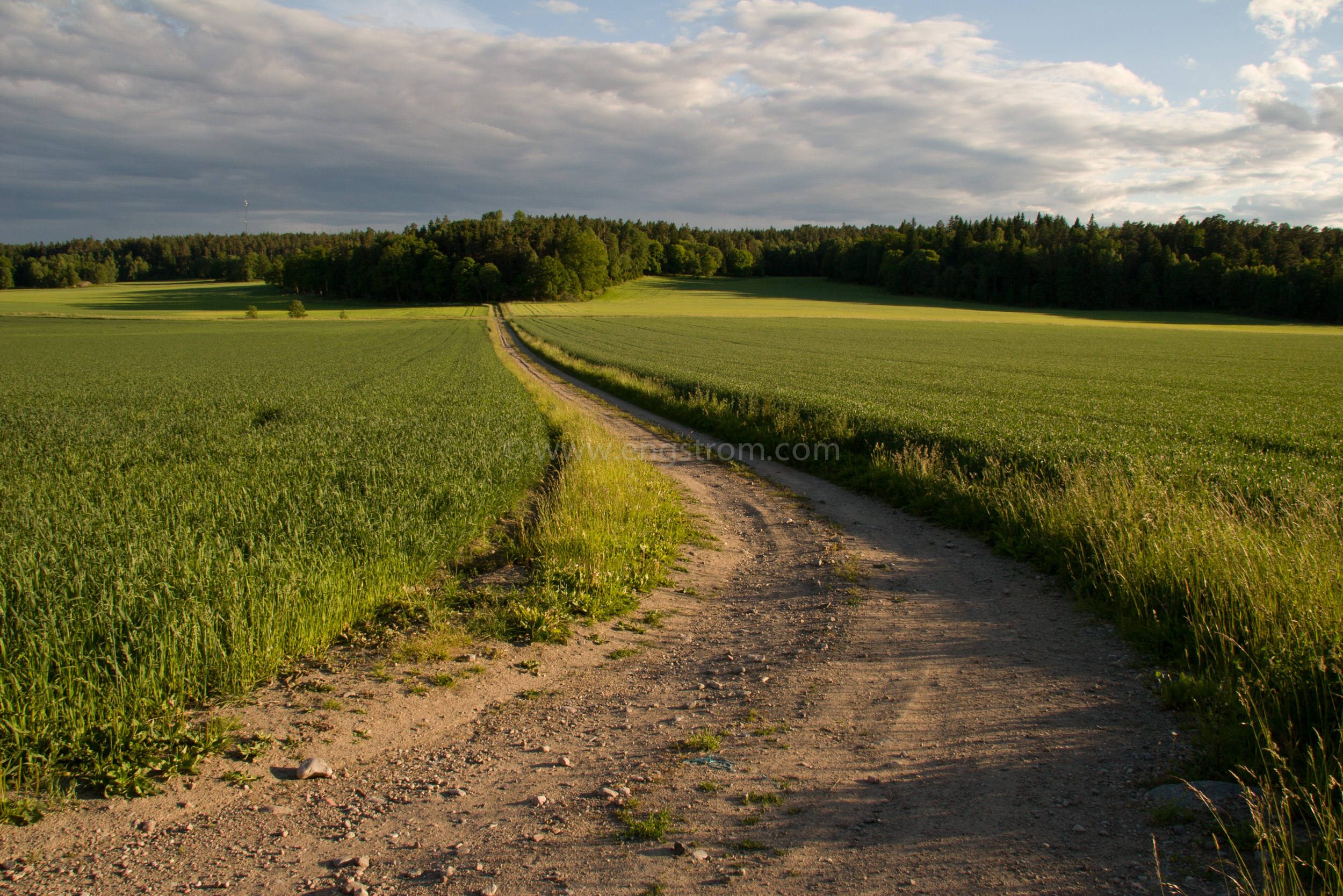 JE_4140, Grusväg mellan två åkrar i kvällsljus, Jonas Engström