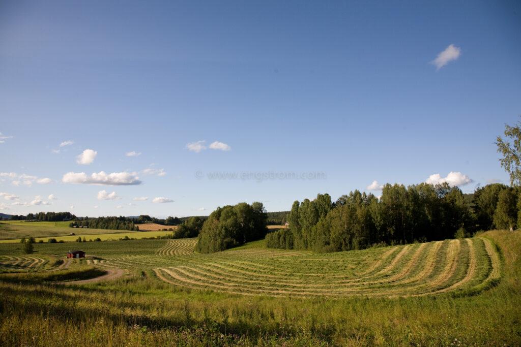 JE_66530, De nyslagna strängarna slingrar sig fram genom landskapet, Jonas Engström