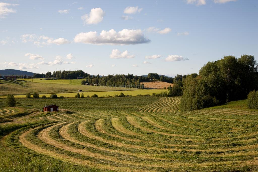 JE_66532, De nyslagna strängarna slingrar sig fram genom landskapet, Jonas Engström