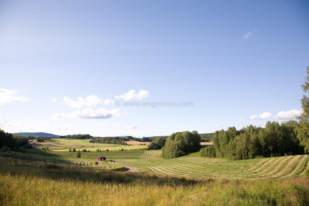 JE_66543, De nyslagna strängarna slingrar sig fram genom landskapet, Jonas Engström