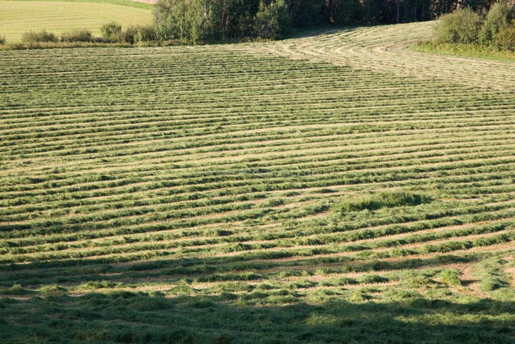 JE_66549, De nyslagna strängarna slingrar sig fram genom landskapet, Jonas Engström