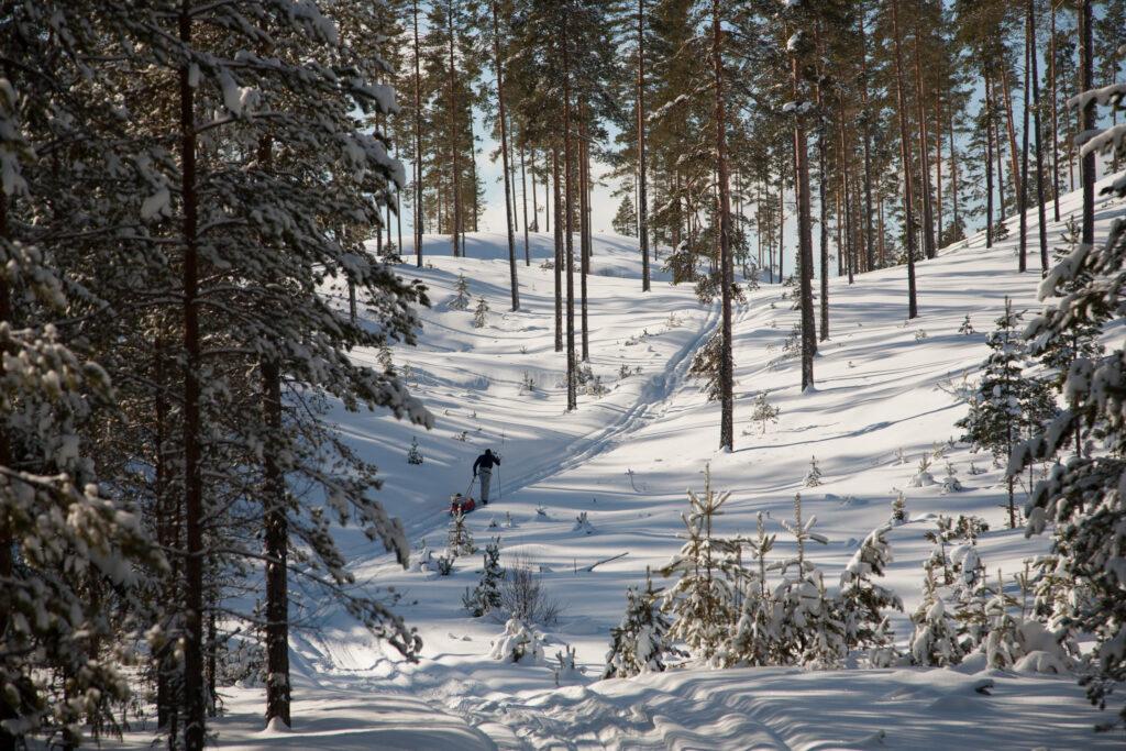 JE_72039, Skidåkning i skog i vinterskrud, Jonas Engström