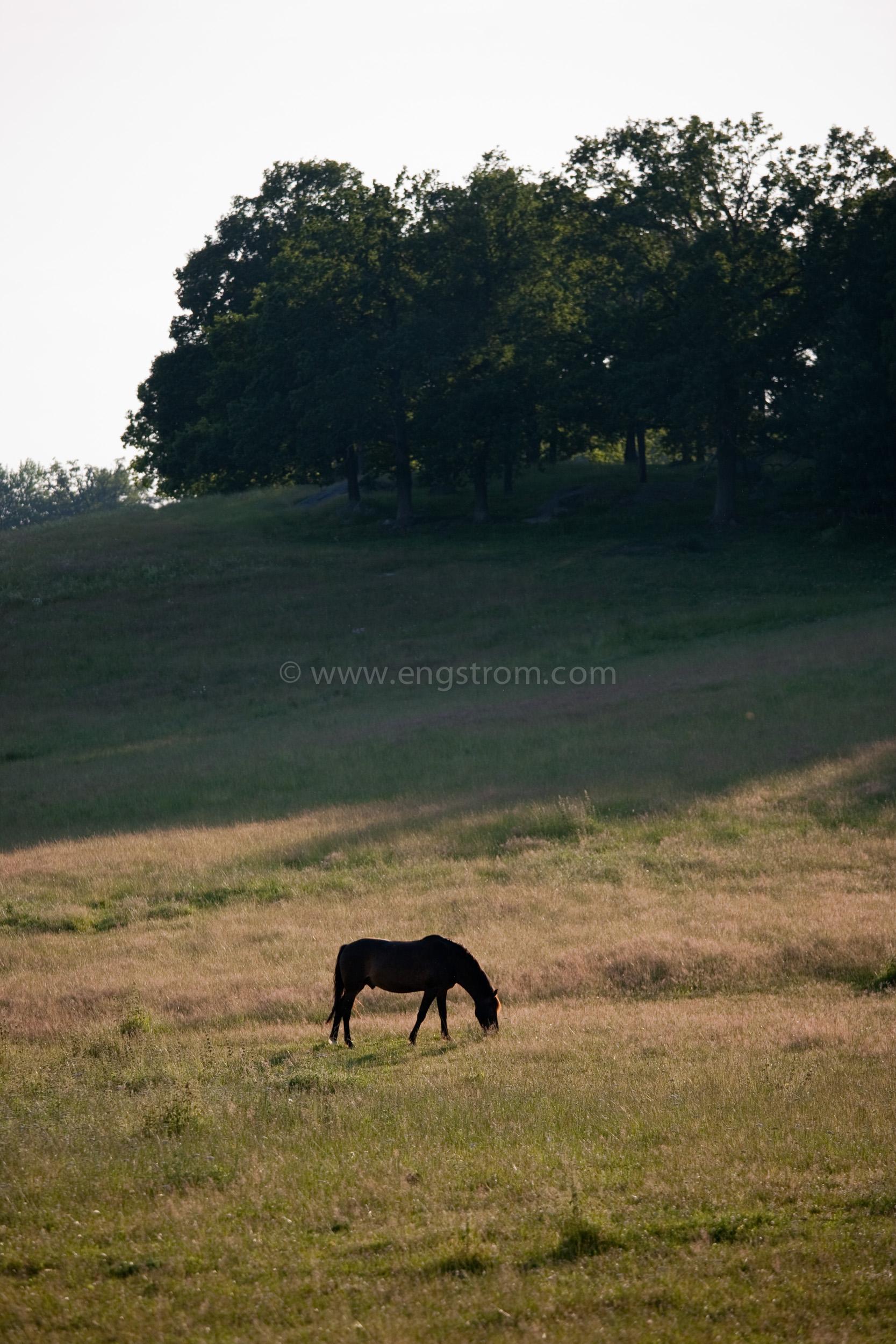 JE_74151, Häst på sommarbete, Jonas Engström