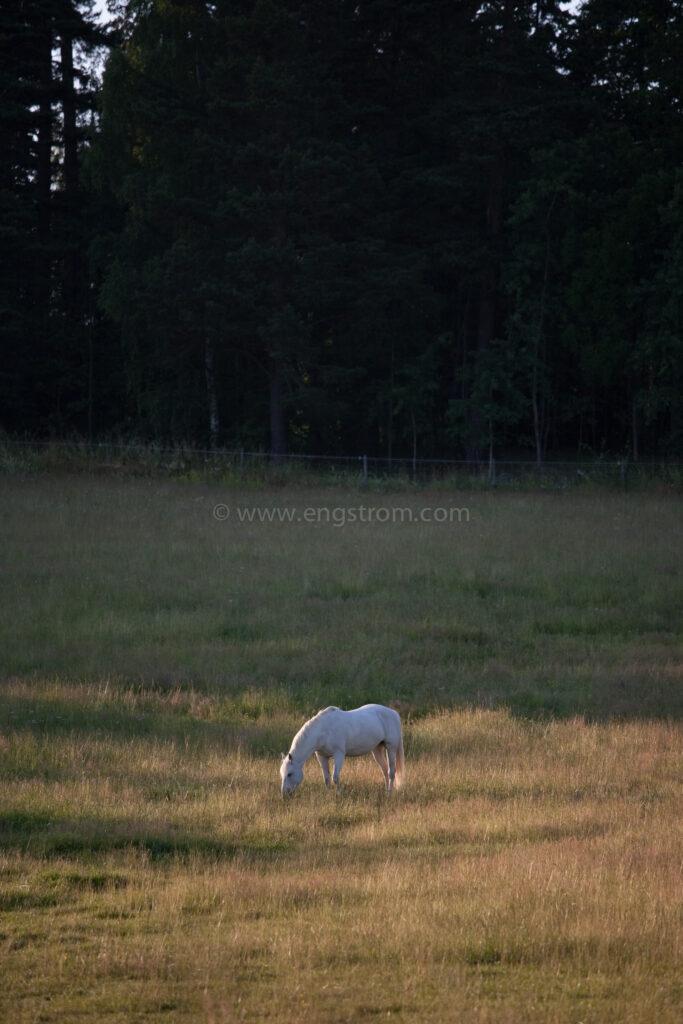 JE_74167, Häst på sommarbete, Jonas Engström