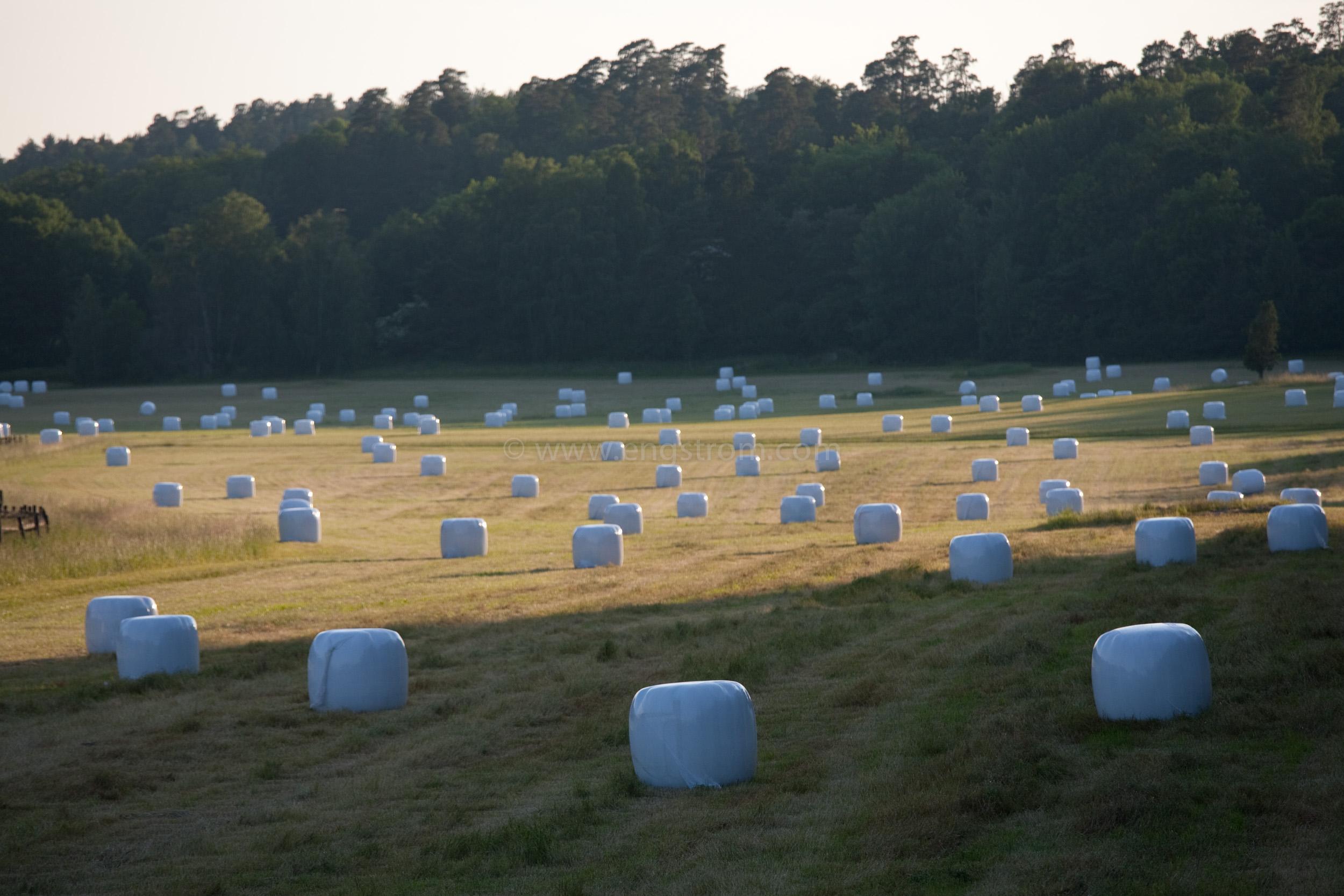 JE_74200, Rundbalar med ensilage i solnedgång, Jonas Engström