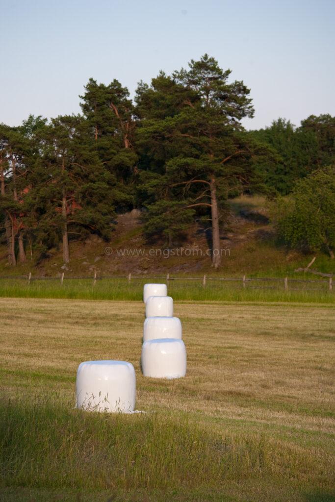 JE_74230, Rundbalar med ensilage i solnedgång, Jonas Engström